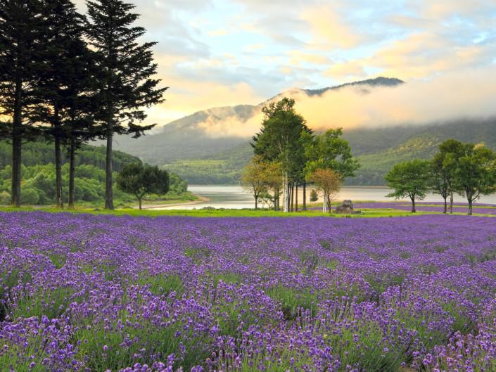 Summer of Hokkaido Flow Photos