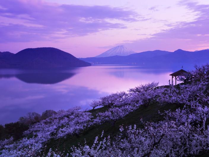 洞爺湖と梅の花