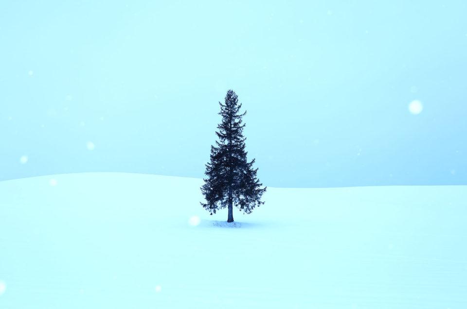 北海道 美瑛 クリスマスツリー
