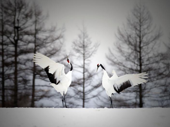 Winter of Hokkaido Flow Photos